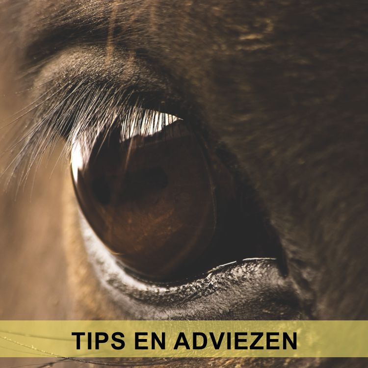 Tips en Adviezen